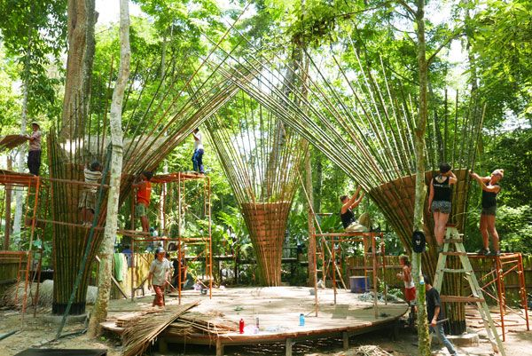 Bamboo-Trees-in-construction